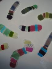 Fused Glass Chromosomes